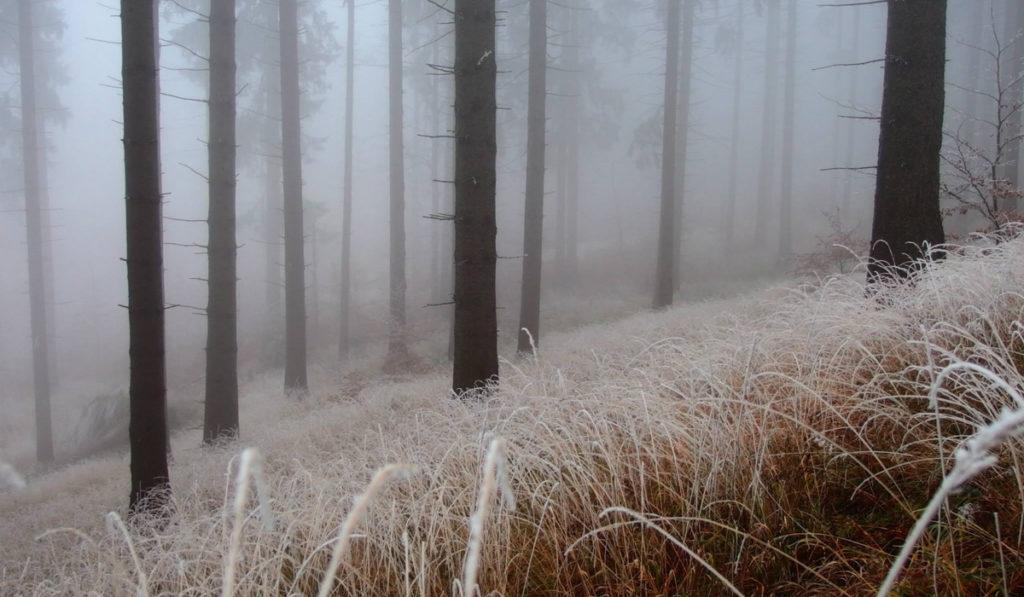 mlha ve zmrzlých Rychlebách